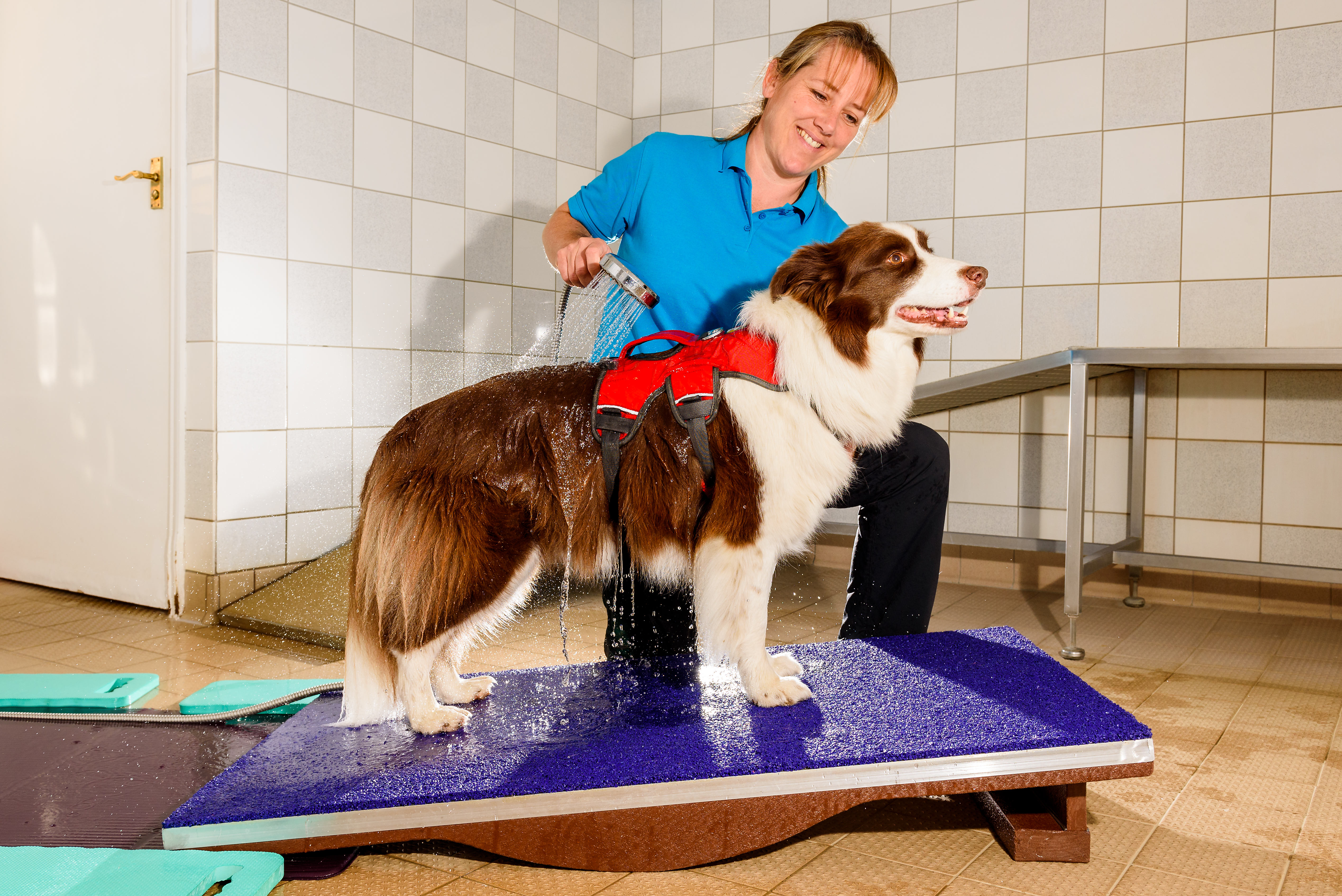 K9HS Dog Hydrotherapy Photography